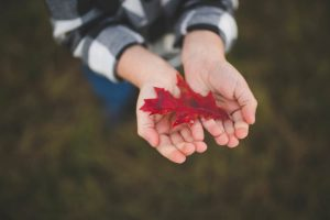 boy finds red fall leaf on tree farm