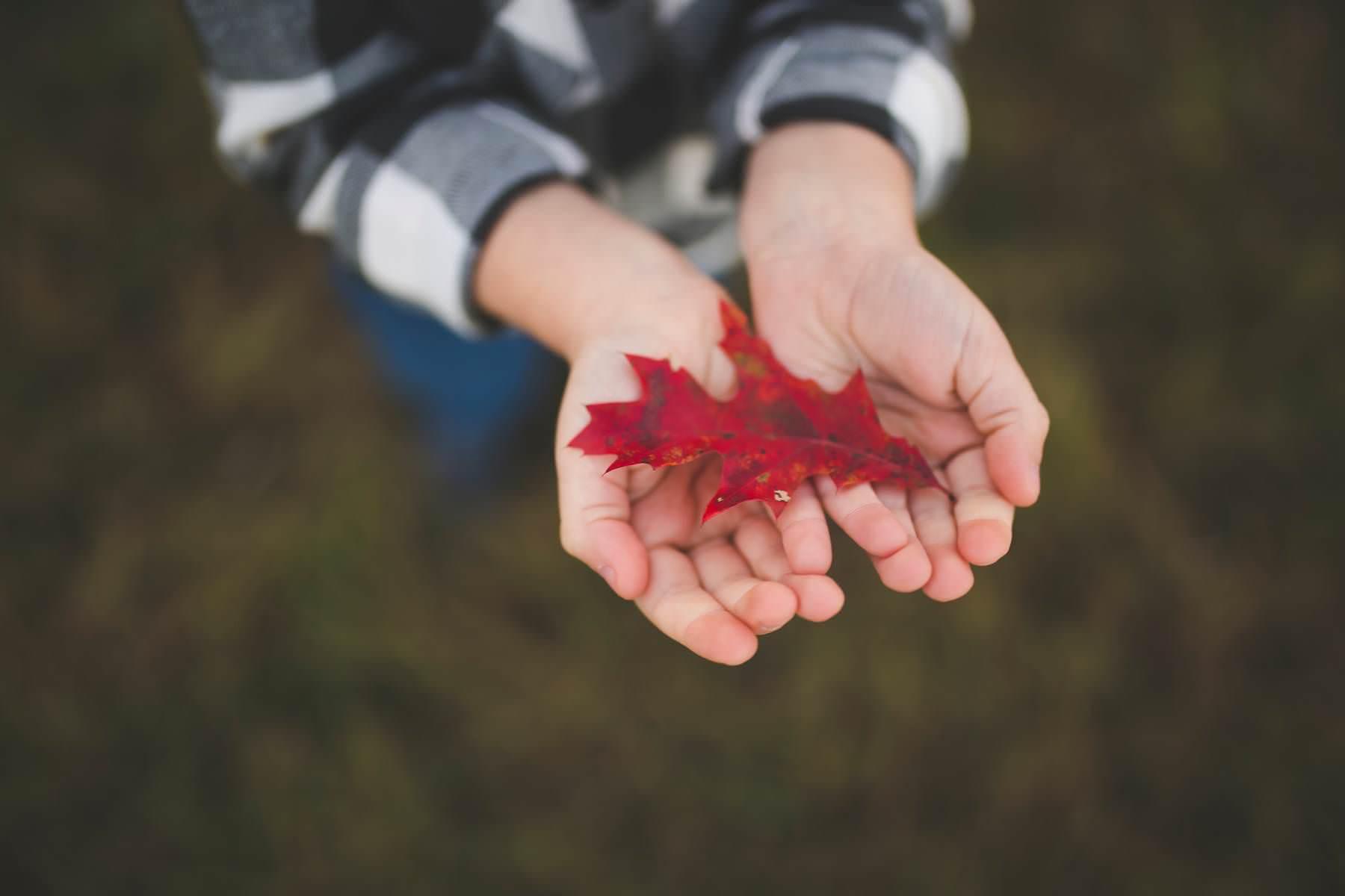 boy finds red fall leaf on tree farm